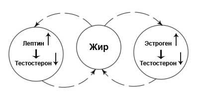 kakie-gormoni-soderzhatsya-v-sperme